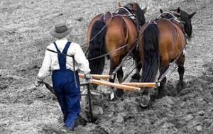 7-plowing-field